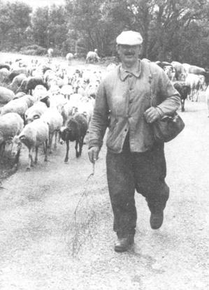 Berger cap-corsin (1960)