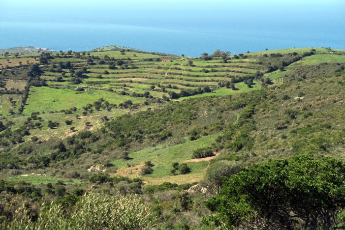 Paysage agro-pastoral en terrasses bien entretenu