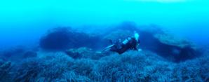 Grottes marines de Riva Bella entourées d'herbier de posidonies © N. Barraqué/Turtle Prod