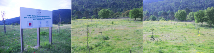 Réhabilitation du site de la Ghjiunta par la Communauté de Communes du Centre Corse 5000 m2 réhabilités 250 arbres replantés (financée sur le programme 2007-2013)