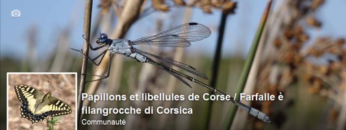 À u Cunservatoriu di l'insetti di Corsica l'abbisognanu e vostre osservazione !