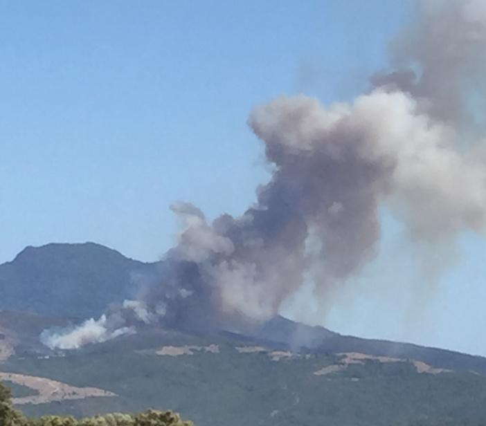 Pour une stratégie coordonnée de réhabilitation des zones incendiées