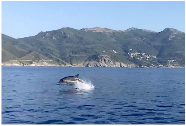 Le morbillivirus à l'origine de l'hécatombe des dauphins en Méditerranée