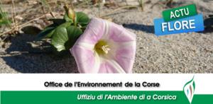 Interview de François Sargentini relatif à la prévention de l'introduction de Xylella fastidiosa en Corse
