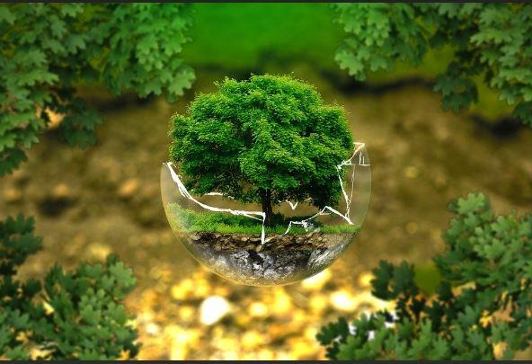 Une juridiction pour les infractions à l'environnement