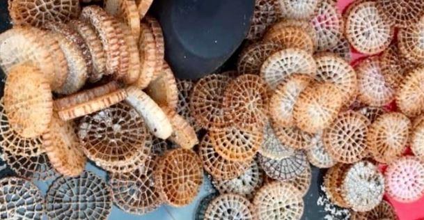 Pollution plastique marine : L'Office de l'environnement entend lutter contre les Biomédias en Corse