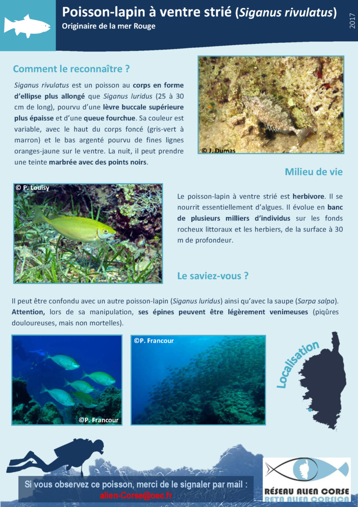 Fiche de signalisation ALIEN du crabe bleu américain Callinectes sapidus
