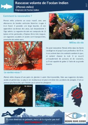 """A rete """"Alien Corsica"""""""
