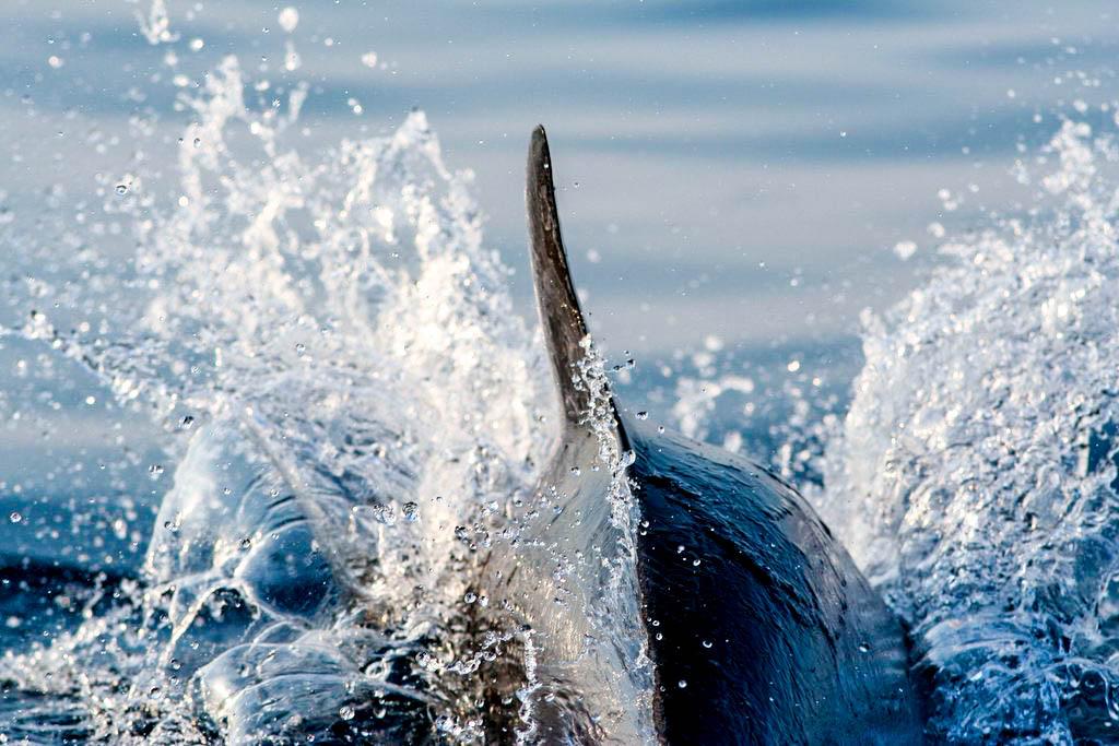 I cetacei
