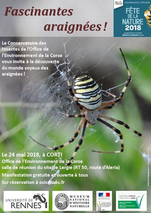 Conférence du 24 mai sur les araignées de Corse