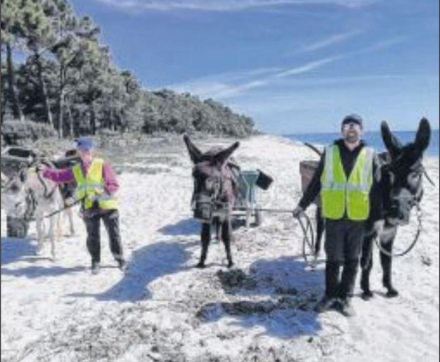 Les ânes ont nettoyé les plages