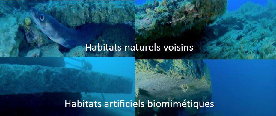 De la conception à l'éco-conception des ouvrages maritimes : intégrer la nature au projet d'aménagement maritime