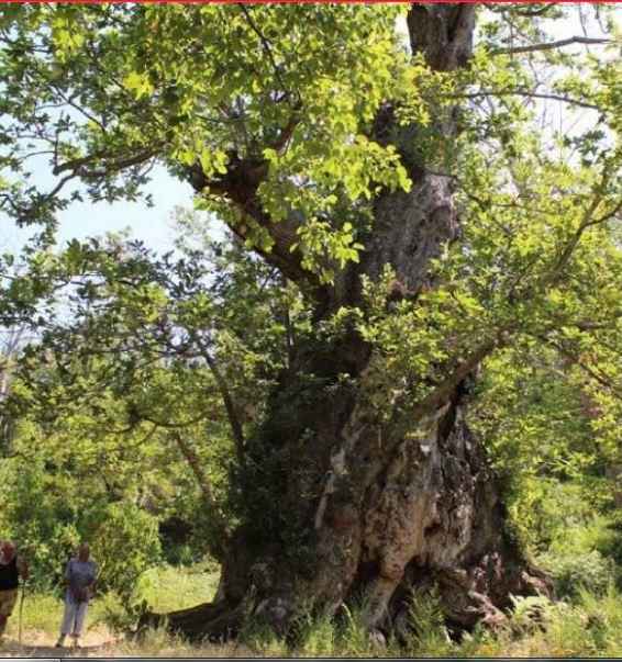 PIANELLU Conférences et concert pour la quatrième journée autour de l'arbre d'Anne Franck