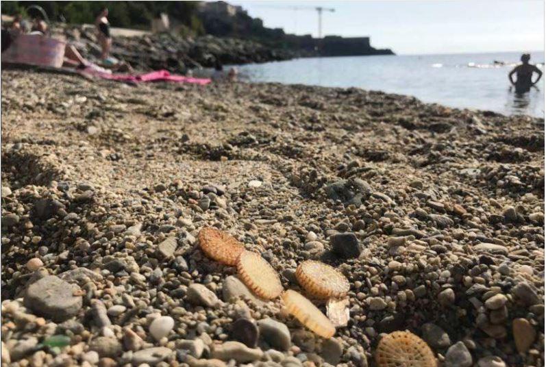 Des pastilles de traitement des eaux s'échouent sur les plages