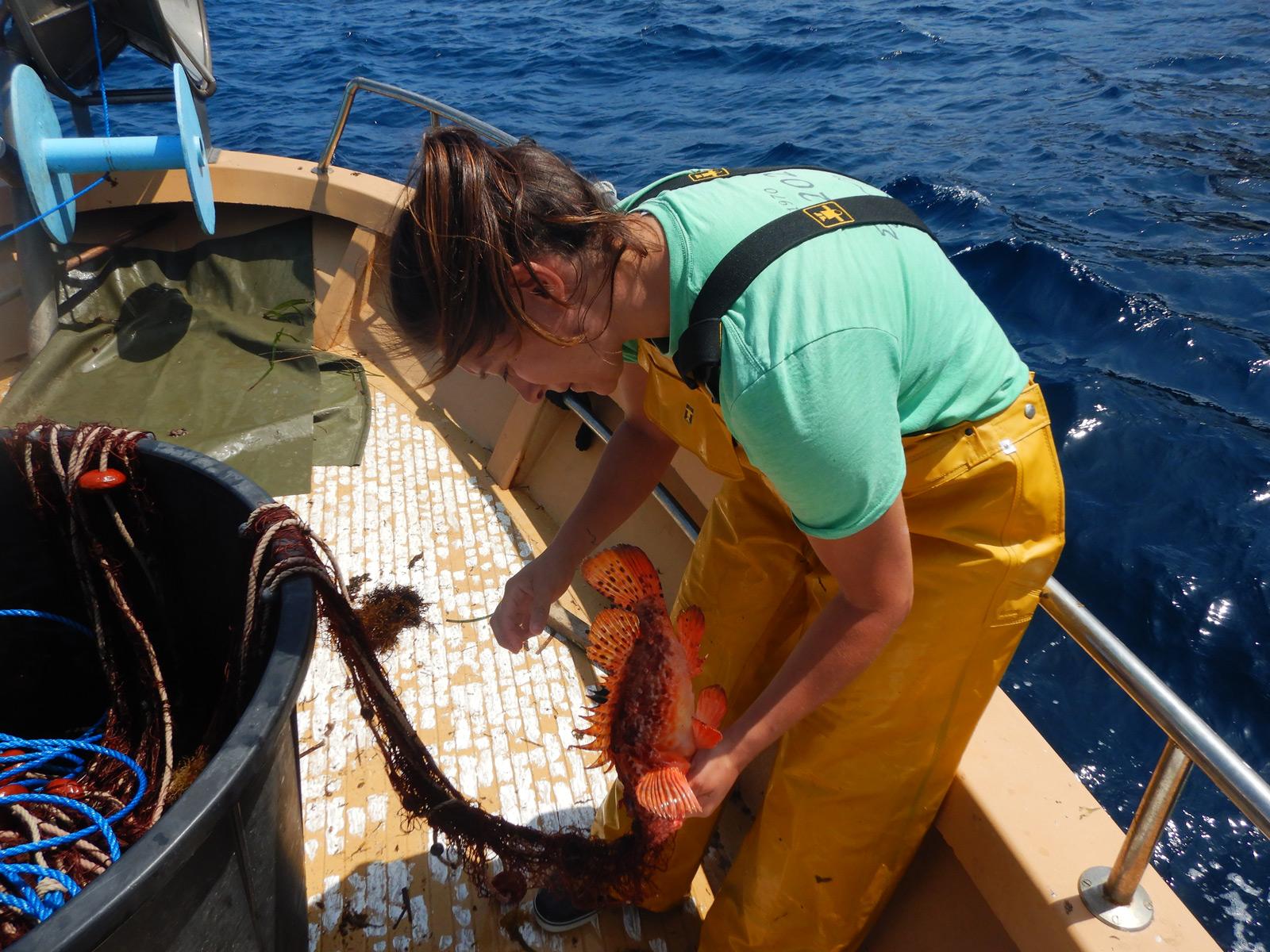 Un réseau d'observateurs scientifiques embarqués à bord des navires de la petite pêche côtière de Corse