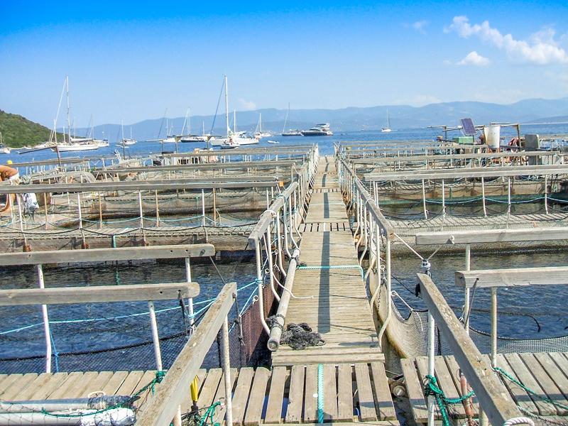 Ferme marine de Campomoro
