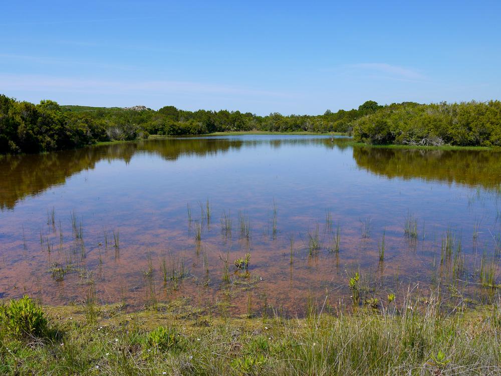 La mise en eau des mares s'étend selon les années de la fin de l'automne à celle du printemps. (photo : C. Clauson/OEC)
