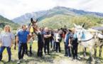 Le sentier du Tavignanu restauré au rythme des mules