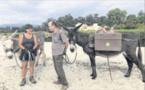 Des attelages d'ânes pour nettoyer les plages