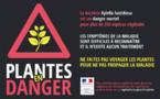 PLANTES EN DANGER : Xylella fastidiosa