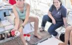 Les eaux du Vieux Port analysées par l'Expédition Med