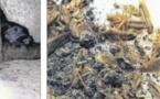 Rats et cafards sont chez eux résidence Fagni, Parc Berthault