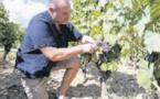 La chambre d'agriculture 2A sonne l'alerte aux pesticides