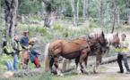 Dans la forêt de Saint-Jean on remet les chevaux au travail