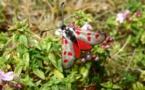 Environnement : en Corse, papillons et libellules en danger