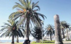 La tension monte d'un cran à l'ombre des palmiers