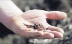 Comment sauver les vers de terre ?