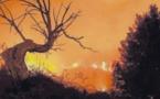Près de 80 hectares ravagés par le feu dans le Cap Corse
