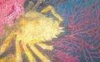 Araignées de mer c'est la fin de la saison