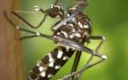 La fin du moustique-tigre? Des chercheurs ont découvert des techniques pour en venir à bout