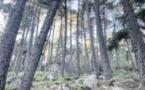 La forêt de l'Ospedale depuis la nuit des temps