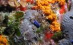 La Planète Revisitée -  expédition au service de la biodiversité en Corse