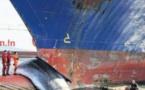 Collisions entre bateaux et cétacés : des progrès à faire