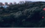 """À Ajaccio, un collectif citoyen veut sauvegarder la Pietrina, """"dernier poumon vert du centre-ville"""""""