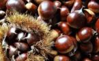 Fiera di a Castagna in Bucugnà : la renaissance de l'arbre à pain
