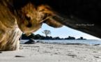 La photo du jour : la fin du pin de Tamaricciu