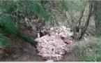 Plusieurs décharges de viande retrouvées près de rivières en Corse