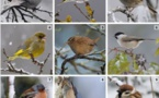 LPO France  : 🐦 Les 25 et 26 janvier c'est le Comptage des oiseaux des jardins.