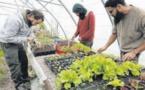 Un jardin pilote pour tendre vers l'autonomie alimentaire