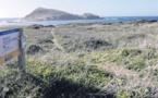 Le plan de l'îlot de Centuri se donne les moyens de son succès