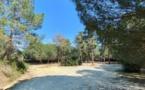 Forêt de Pinia : le message enfin compris