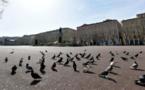 Les pigeons bisets, rois de la place Saint-Nicolas