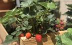 Fium'orbu Castellu Oriente    Une crise sanitaire qui a porté ses fruits dans les jardins