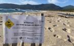 PRUPIÀ   Attention aux nids d'oiseaux sur la plage !