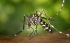 Moustiques et maladies : que faut il savoir ?