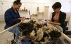CORTI  Une feutreuse au Fablab pour faire revivre la laine